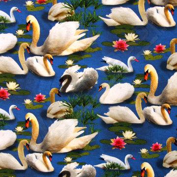 Zwanen tussen lelieblad op blauw