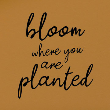 Applicatie flex - Bloom where you are planted
